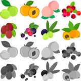 The icons of fruits. Plum and apricot and peach and cranberry and jujube and raspberry and blackberry and olive and loquat royalty free illustration