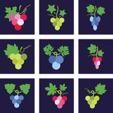 Icons of grapes, vector. Nine colorful icons of grapes, vector Royalty Free Stock Images