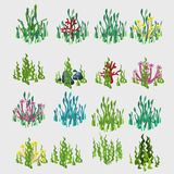 Icons grass with colorful flowers and coral Stock Image