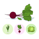 Icons green onion,beet,cabbage Stock Photo