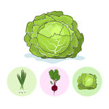 Icons green onion,beet,cabbage Royalty Free Stock Photography