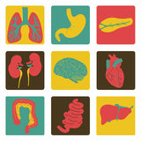 Icons of internal organs royalty free stock photography