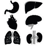 Icons of the internal organs on white. Raster Royalty Free Stock Photography