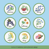 Icons of medicinal plants 6 Royalty Free Stock Photography