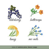 Icons of medicinal plants 4 Stock Image
