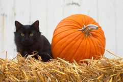 Icons of October. And fall, a black cat and a pumpkin royalty free stock photo