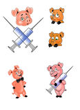 Icons of pig and hypodermics  Stock Photo