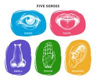 Icons set of five human senses in engraved style.Vector color illustration of sensory organs. Icons set of five human senses in engraved style. Vector color vector illustration
