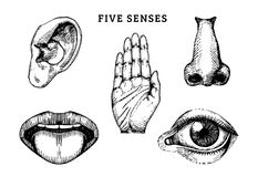 Icons set of five human senses in engraved style. Vector illustration of sensory organs.  stock illustration