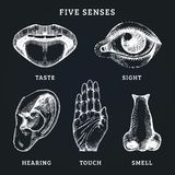 Icons set of five human senses in engraved style. Vector illustration of sensory organs.  vector illustration
