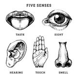 Icons set of five human senses in engraved style. Vector illustration of sensory organs.  royalty free illustration