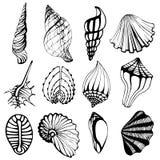 Icons shells Stock Image