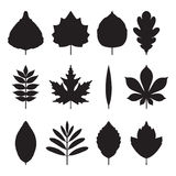 Icons tree leaves. Silhouette of trees leaf. Set of elements Royalty Free Stock Image