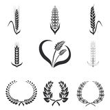 Icons of wheat, rye, corn- vector illustration. stock images