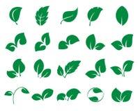 Iconss verdes da folha isolados em um fundo branco Imagem de Stock