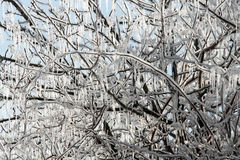 Icy Arch. Ice covered tree branches on a sunny winter day Royalty Free Stock Photo
