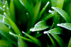 Icy Blades of Grass royalty free stock image