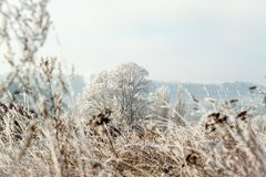 Icy blades of grass. On the field Royalty Free Stock Photography