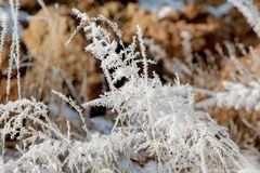 Icy blades of grass Royalty Free Stock Images