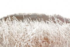 Icy blades of grass. On the field Royalty Free Stock Images
