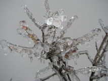 Icy branch Royalty Free Stock Photo