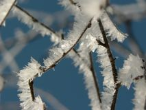 Icy branch. An icy branch Stock Image