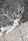 Icy branch with abstract background Stock Photos