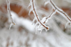 Icy branch Stock Photos