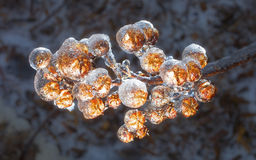 Icy branch Stock Images