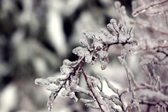 Icy branch Royalty Free Stock Images
