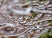 Icy branch on forest background Royalty Free Stock Photos