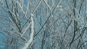 Icy branch of tree. On wind, shallow depth of field, vertical panning stock video