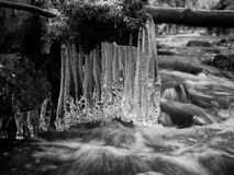 Icy branches above  winter creek. Bright reflections in icicles, Stock Images