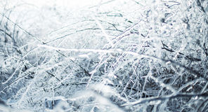 Icy branches Stock Image