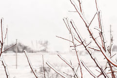 Icy  branches and snowfall  outside the window Royalty Free Stock Images