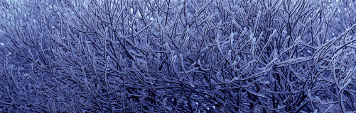 Icy branches texture Royalty Free Stock Photography