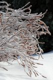 Icy brush Stock Photos