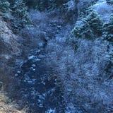 Icy Brush stock photo