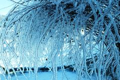 Icy Bush. Bush coated in layer of ice Stock Images