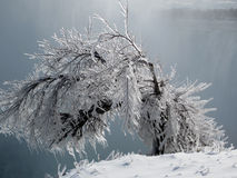 Icy bush, Niagara Falls, Ontario Canada. In winter, frozen spray from Niagara Falls coats a small bush clinging to the edge of the gorge. The falls and surrounds Royalty Free Stock Image