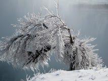 Icy bush, Niagara Falls, Ontario Canada Royalty Free Stock Image