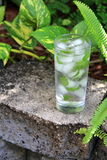 Icy cold glass of fresh mint water Royalty Free Stock Photography