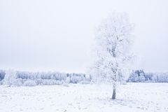 Icy cold winter in the forest. Frosty wood and ground.  Freeze temperatures in nature. Snowy natural environment Stock Images