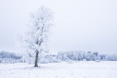 Icy cold winter in the forest. Frosty wood and ground.  Freeze temperatures in nature. Snowy natural environment Stock Photo