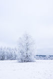 Icy cold winter in the forest. Frosty wood and ground.  Freeze temperatures in nature. Snowy natural environment Royalty Free Stock Photography