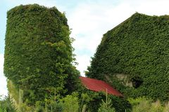 Ivy covered barn and silo stock image