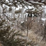 Icy Days. Ice on trees after a Winter storm Royalty Free Stock Photo