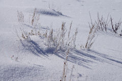 Icy dried grass on sparkling snow Royalty Free Stock Images