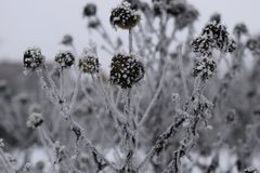 Icy Flowers On A Cold Winter Day Stock Photos