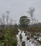 Icy footpath between snow, heather, bushes and trees on a winter day royalty free stock photography